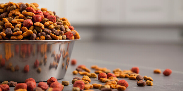 How to Choose the Right Pet Food Brand