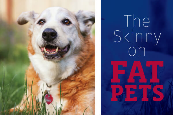 The Skinny on Fat Pets