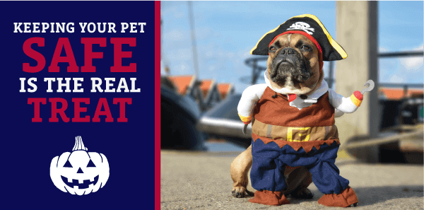 Keeping Your Pet Safe is the Real Treat
