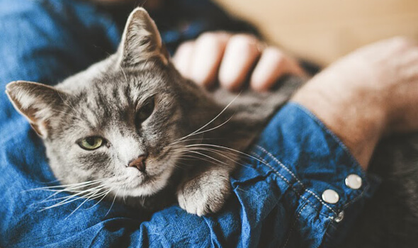 Preventative Care for Cats